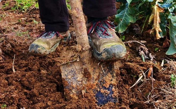 scavi-tecnica-e-copertura-dell-impianto-d-irrigazione_NG1