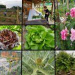 fotogallery… vita da orto