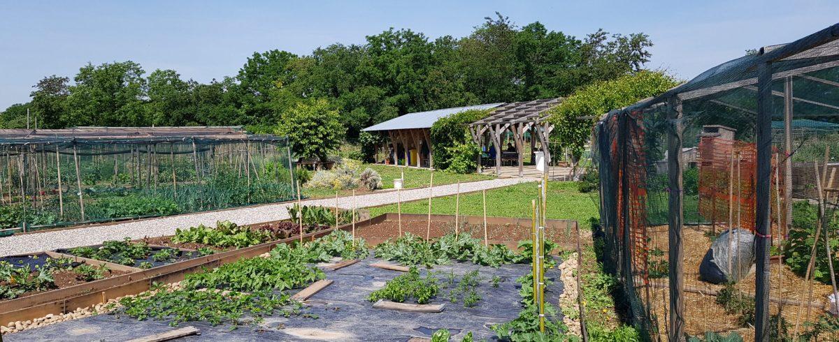 CITYFARMERS orto giardino condiviso