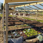 Tabella coltivazioni ortaggi in orto