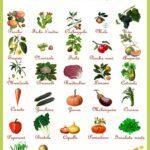 Quali ortaggi seminare a settembre